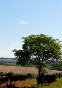 View of the farm land